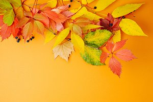 Autumn leaves on orange background