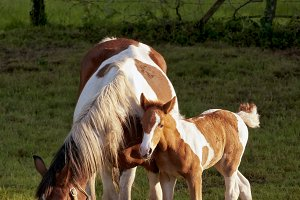 foal and mare white and brown