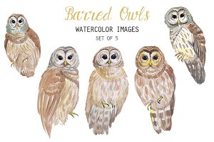 Watercolor Barred Owls Clipart
