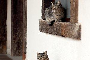gray cats in wooden window