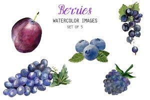 Watercolor Berries Clipart