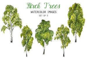 Watercolor Birch Trees Clipart