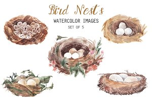 Watercolor Bird Nests Clipart