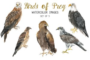 Watercolor Birds of Prey Clipart