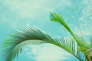Tropical vibes. Summer background.