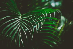 Abstract tropical background.