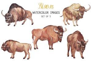 Watercolor Bison Clipart