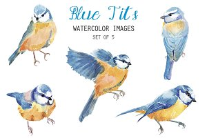 Watercolor Blue Tits Clipart
