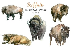 Watercolor Buffalo Clipart