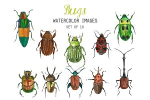 Watercolor Bugs Clipart