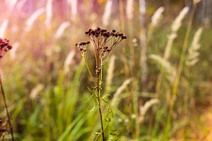 Autumn grass and wild floral