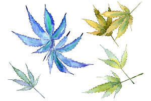 Cannabis leaves PNG watercolor set