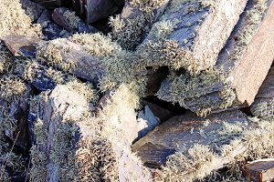 Stone Wall covered with lichen