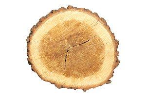 Wooden stump isolated on white