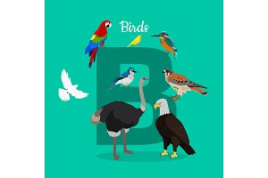 Birds with Letter B Isolated. ABC
