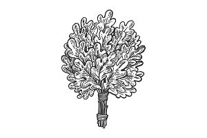 Oak broom for sauna engraving vector