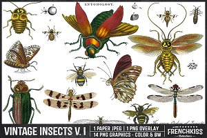 Vintage Insects V. I