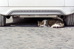 Ccat sleeping under a white car