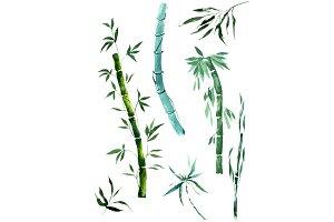 Exotic bamboo PNG watercolor set