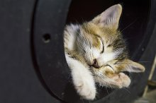 Sleeping Little Cat by  in Animals