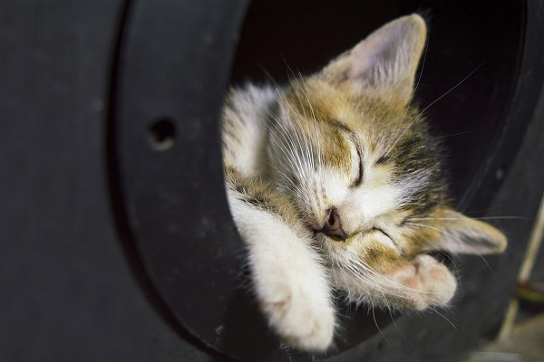 Animal Stock Photos: Smile Art Studio - Sleeping Little Cat