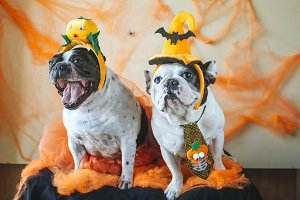 couple of dogs with halloween costum