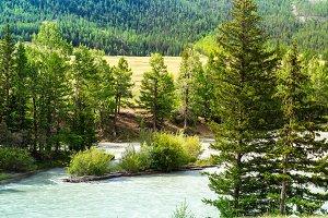mountain river Chuja runs between co