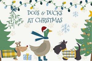 Dogs & Ducks at Christmas