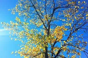 Vertical autumn tree landscape backg