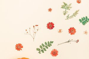 Frame made of pumpkins dried flowers