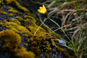 Yellow flower and moss