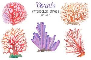 Watercolor Corals Clipart