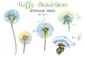 Watercolor Puffy Dandelions Clipart