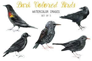 Watercolor Dark Colored Bird Clipart