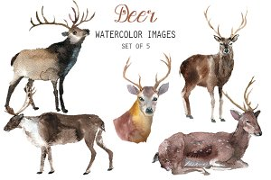 Watercolor Deer Clipart