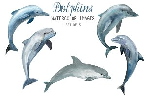 Watercolor Dolphins Clipart