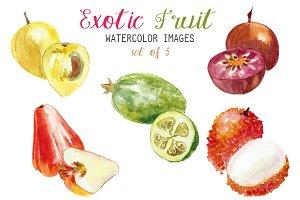 Watercolor Exotic Fruit Clipart