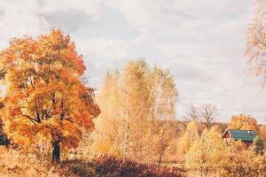Golden autumn, country life