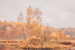 Golden autumn, lake in the forest