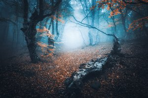 Mystical forest in blue fog. Autumn