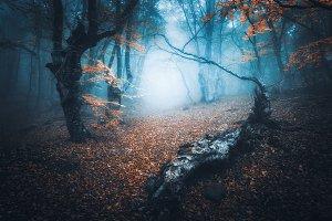 Mystical forest in blue fog. Autumn