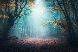 Mystical forest in fog in autumn