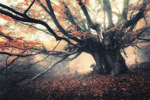 Old magical tree with big branches