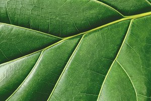 Macro green leaf texture background
