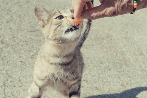 cat eating something from the hand o