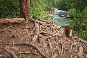 Nested Forest Stream