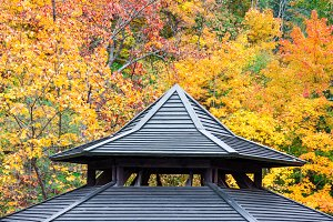 Rooftop detail with autumn foliage