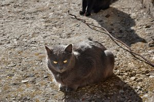 Gray and black cats sitting on the g