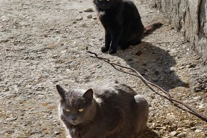 Gray and black cats