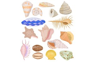 Shells vector marine seashell and